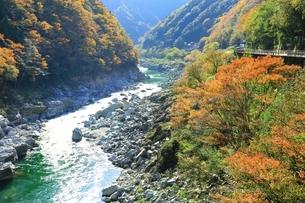 紅葉の小歩危峡の写真素材 [FYI01819636]