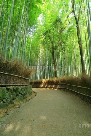 嵐山 嵯峨野 竹林の道の写真素材 [FYI01819639]