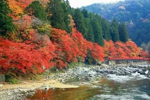 紅葉の香嵐渓の写真素材 [FYI01819668]