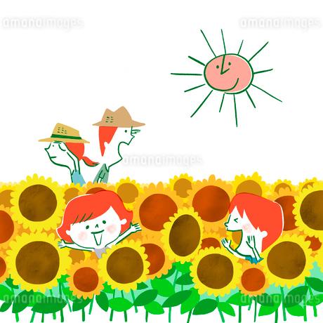ひまわり畑でかくれんぼをする家族のイラスト素材 [FYI01819717]