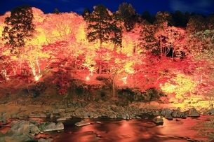 紅葉の香嵐渓ライトアップの写真素材 [FYI01819770]