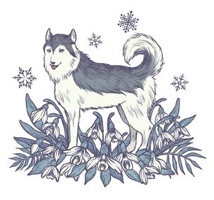 冬のハスキー犬のイラスト素材 [FYI01819771]