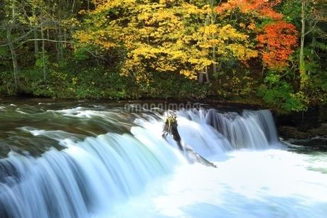 さくらの滝と紅葉の写真素材 [FYI01819790]