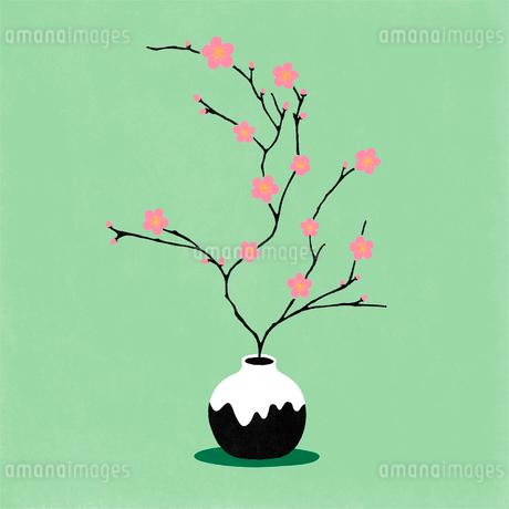梅の生け花のイラスト素材 [FYI01819927]