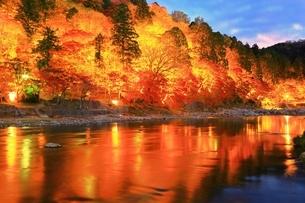 紅葉の香嵐渓ライトアップの写真素材 [FYI01819930]