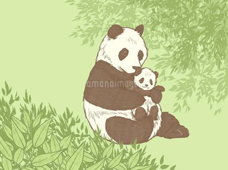 ジャイアントパンダの親子のイラスト素材 [FYI01820150]