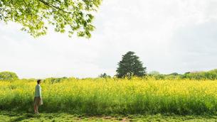 菜の花畑を散歩する女性の写真素材 [FYI01820400]