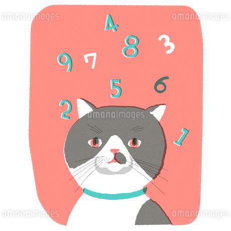 猫と数字のイラスト素材 [FYI01820406]