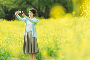 菜の花畑で写真を撮る若い女性の写真素材 [FYI01820446]