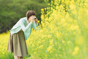 菜の花畑で写真を撮る若い女性の写真素材 [FYI01820448]