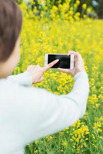菜の花畑で写真を撮る若い女性の写真素材 [FYI01820516]