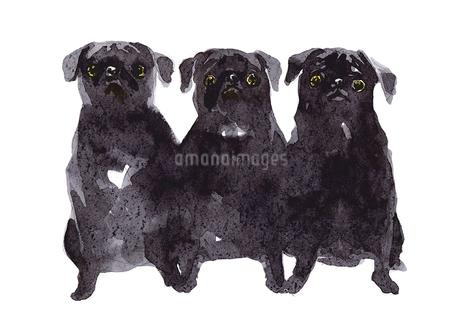 3匹の黒パグのイラスト素材 [FYI01820866]