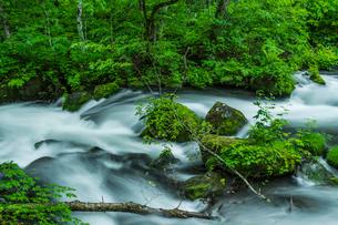 小雨がしたたる新緑の奥入瀬渓流 阿修羅の流れの写真素材 [FYI01820899]