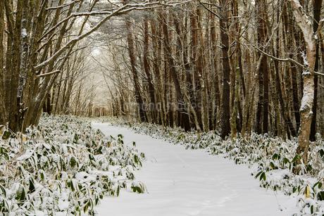 雪深い菅平高原の木々に囲まれた道の写真素材 [FYI01820972]