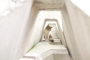 テトラポットで休んでいる猫の写真素材 [FYI01821191]
