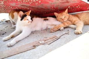船の陰で休んでいる2匹の猫の写真素材 [FYI01821197]