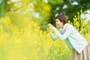 菜の花畑で写真を撮る若い女性の写真素材 [FYI01821208]