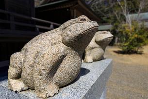 カエルの石像の写真素材 [FYI01821271]