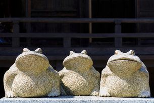 カエルの石像の写真素材 [FYI01821308]