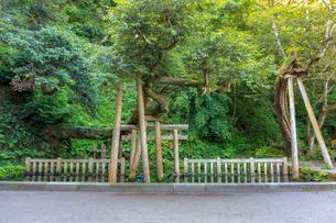 鹿島神宮の御手洗池の写真素材 [FYI01821385]