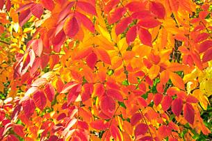 秋色の写真素材 [FYI01822171]
