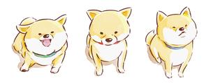柴犬3匹のイラスト素材 [FYI01822194]