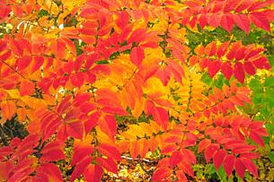 秋色の写真素材 [FYI01822228]