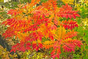 秋色の写真素材 [FYI01822425]