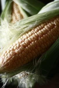 トウモロコシと籐籠の写真素材 [FYI01823354]