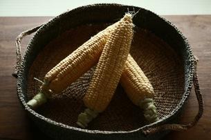 トウモロコシと籐籠の写真素材 [FYI01823388]