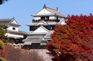 秋の松山城の写真素材 [FYI01823809]
