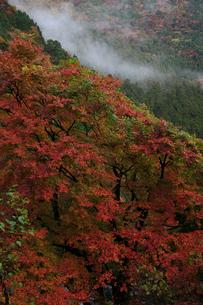 秋の別子ラインの写真素材 [FYI01823835]
