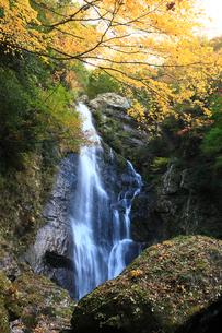 秋の魔戸の滝の写真素材 [FYI01823949]