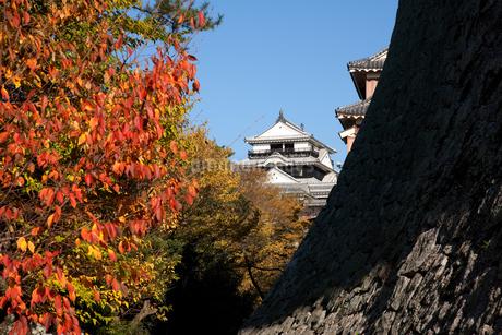 秋の松山城の写真素材 [FYI01824016]