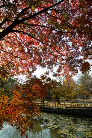 秋の道後公園の写真素材 [FYI01824100]
