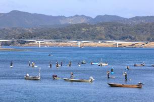 四万十川の青海苔漁の写真素材 [FYI01824129]