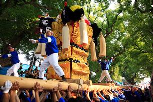 新居浜太鼓祭りの写真素材 [FYI01824308]