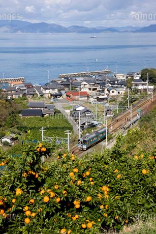 みかん畑とローカル列車の写真素材 [FYI01824588]