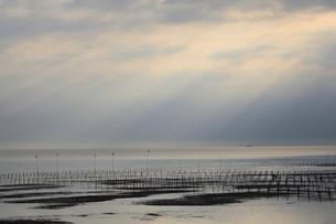 瀬戸内海の海苔の養殖と朝の光の写真素材 [FYI01825112]