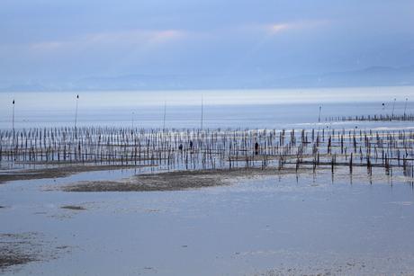 瀬戸内海の海苔の養殖の写真素材 [FYI01825150]