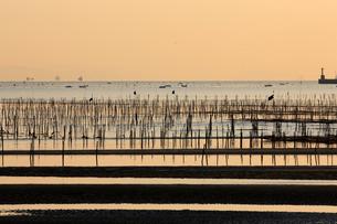 海苔の養殖と朝焼け の写真素材 [FYI01825175]