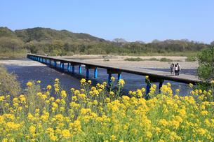 四万十川 佐田沈下橋と菜の花の写真素材 [FYI01825210]