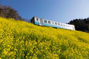 菜の花とローカル列車の写真素材 [FYI01825237]