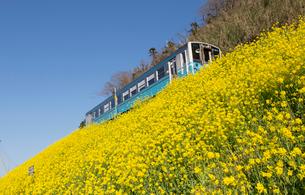 菜の花とローカル列車の写真素材 [FYI01825240]