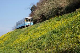 菜の花とローカル列車の写真素材 [FYI01825461]