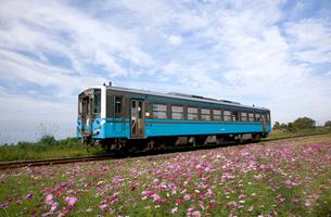 コスモスとローカル列車の写真素材 [FYI01825547]