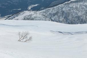 八方尾根と麓白馬村の景色の写真素材 [FYI01825761]