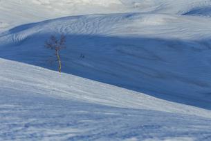 八方尾根の雪解け模様の斜面の写真素材 [FYI01825791]