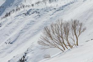 残雪期の八方尾根からの景色の写真素材 [FYI01825822]