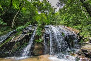 小雨降る梅雨の金引の滝 の写真素材 [FYI01825988]